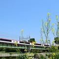 写真: Narita Express 8