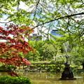 写真: 新緑の公園
