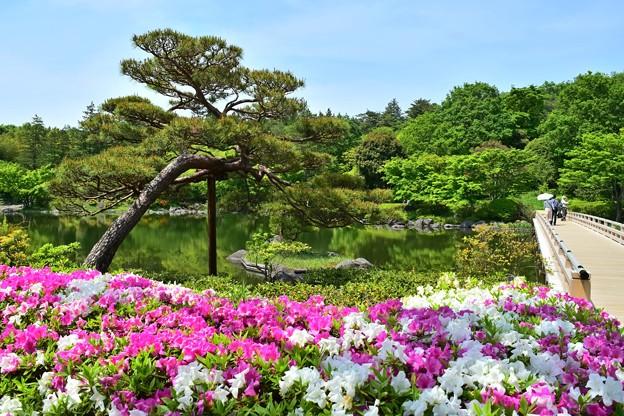 新緑の庭園