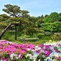 写真: 新緑の庭園