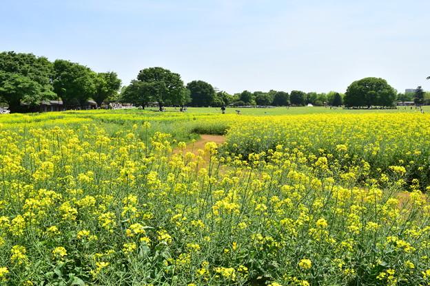 黄色い小路