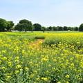 写真: 黄色い小路