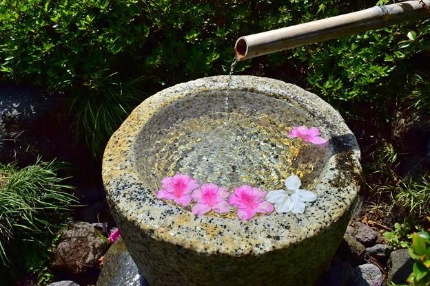 手水鉢の花舟