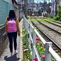 Photos: 薔薇美人