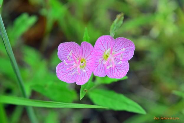 Photos: Twins pink