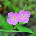 Twins pink