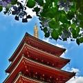 Photos: 天空の紫陽花