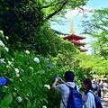 写真: 紫陽花ツーショット