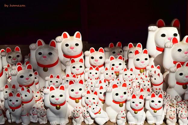 Photos: CATS(=^・^=)