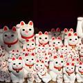 写真: CATS(=^・^=)