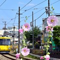 写真: Yellow and pink