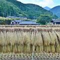 写真: 山郷の秋(2)