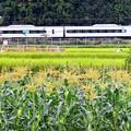写真: 山郷の秋(4)