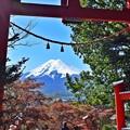 写真: 秋香る富士(4)