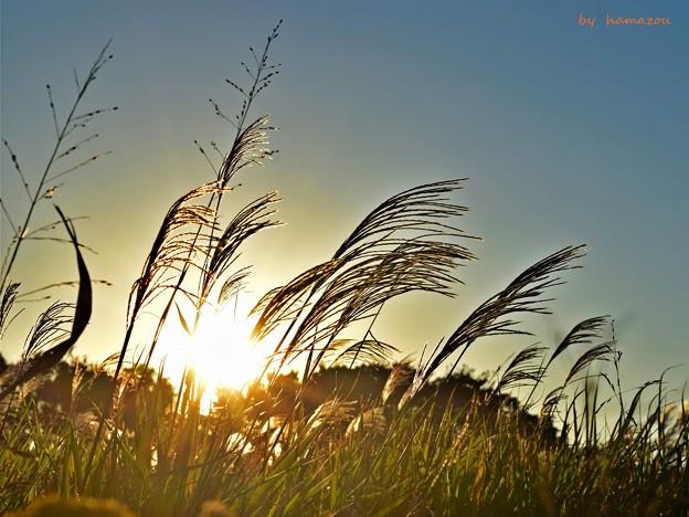Photos: 陽光の薄
