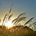 写真: 陽光の薄