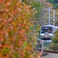 写真: 秋色沿線(26)