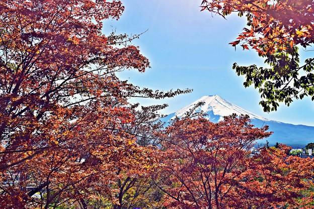 Photos: 秋香る富士(7)