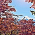 写真: 秋香る富士(7)
