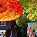 Photos: 秋満開