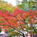 写真: 秋の清滝