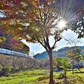 写真: 秋陽