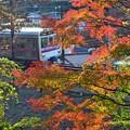 秋色沿線(35)
