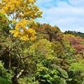 写真: 秋散歩