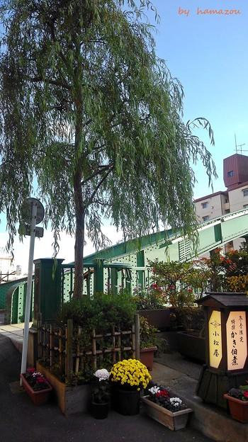 Photos: 柳橋