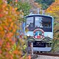 写真: 秋彩に包まれて