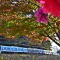 写真: 秋色沿線(41)