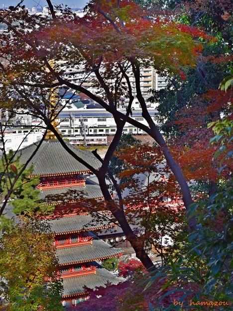 秋色沿線(42)