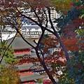 写真: 秋色沿線(42)