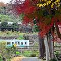 写真: 秋色沿線(43)
