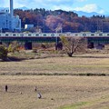 写真: 師走の河川敷