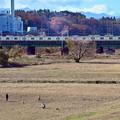 Photos: 師走の河川敷