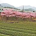 Photos: 春恋し小径