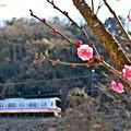 Photos: 梅ちゃん♪