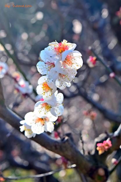Photos: 春光