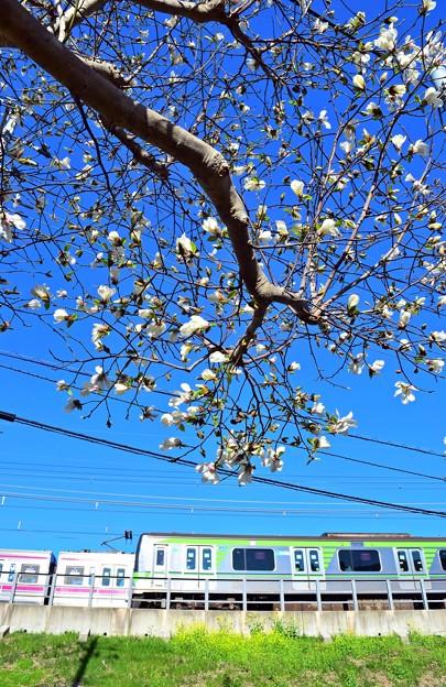分倍河原の春