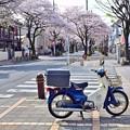 スーパーカブと桜