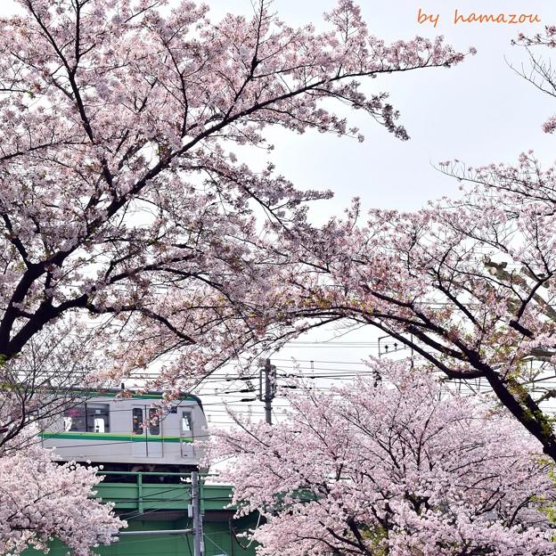 桜に包まれて