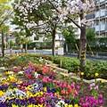 花咲く街路地