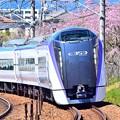 Photos: 春色特急