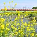 Photos: 春色中央線