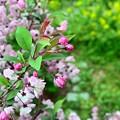 Photos: 庭の花々