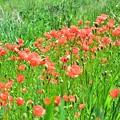 Photos: 河川敷の花