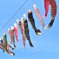 Photos: 青空に泳ぐ♪