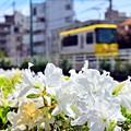 Photos: 初恋沿線