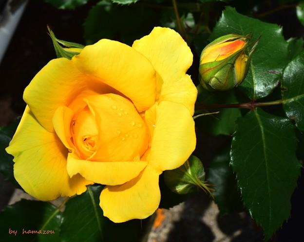 Photos: Yellow